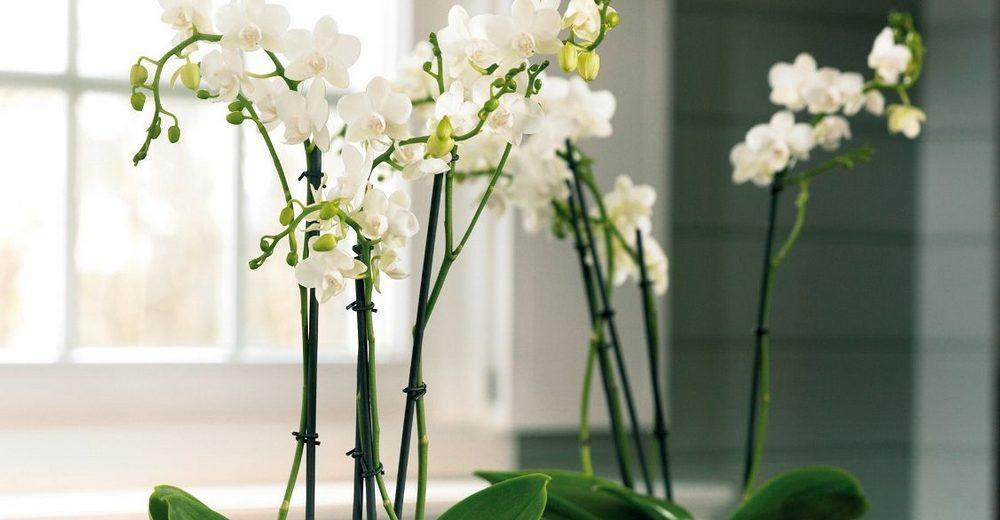 besoin-de-lumiere-des-orchidees