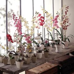 des-orchidees