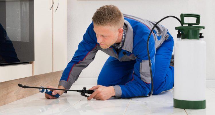 Comment combattre les insectes dans votre maison plan de maison - Combattre humidite maison ...